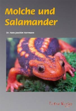 Molche und Salamander - Bild vergrößern