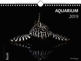 Kalender -AQUARIUM 2019- - Bild vergrößern
